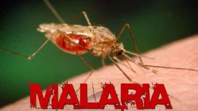 Reuquinol para malaria